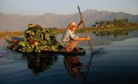 """Removing Water Lilies from Dal Lake"""