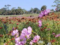 Florida flowers (3)