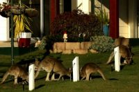 Roos in the front garden