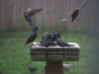 Starling Hot Tub