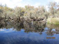 Black Swan Lake, Lakelands, WA