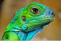lizards_011