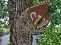 Tree eats sign