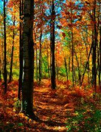 Fall -NNY