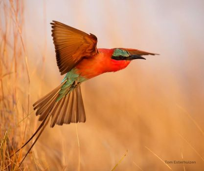 colorful bird