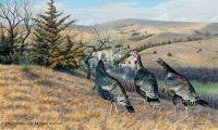 Talkin' Turkey-Merriam Wild Turkeys by Jim Kasper