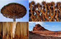 Nature's Wonders #2