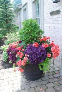 Beautiful Container filled with a lovely plant combination.