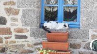 Chat fenêtre chaumiéres