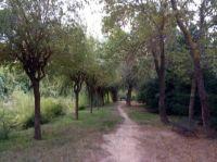 15 09 23 evening walk FullSizeRender