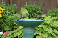 My bird bath -2