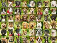Dog Headshot CHALLENGE