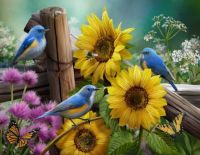 Bluebirds and Sunflowers
