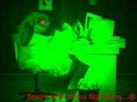 Nightbunny
