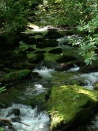 Little River tributary in the Smoky Mtns.