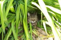 Turbo in Gma's daylilies