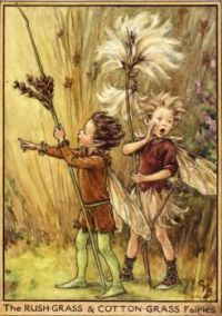 The Rush-Grass & Cotton-Grass Fairies (mini)