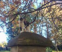Flo the calico cat on entrance column.