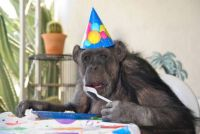 HAPPY BIRTHDAY DEAR ADRIANA..SENT A FRIEND TO HELP YOU EAT YOUR CAKE...