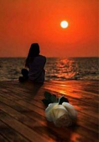 Alone at Sunset with the Ivory Rose