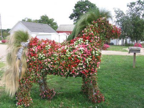 Flower Horse - Harbes Vineyard, North Fork, Long Island, NY