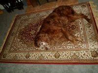 asleep on the rug