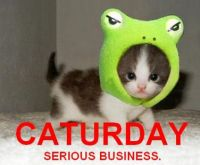 Caturday-almost