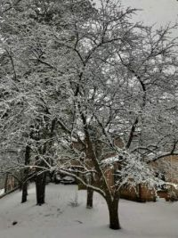 02_07_2021_Snow_scene_3