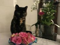 Bella with Roses
