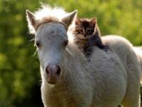 Horse and Kitten Pals