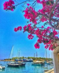 Bouganvillea at Sperses Island, Saronicos Bay, Greece