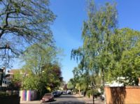 Spring trees in Streatham