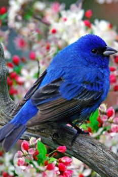 Great looking blue bird