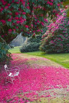 Peaceful spring garden