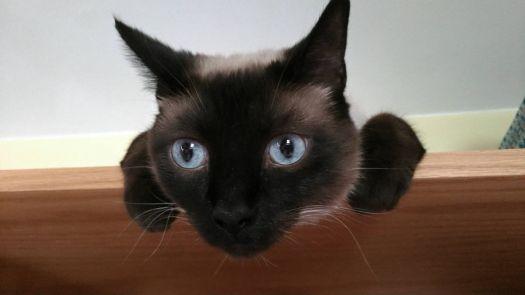 My Kitty Kismet
