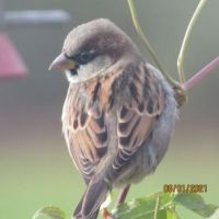 The sparrow then decided on an 'over the shoulder' look.
