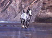 horsesea