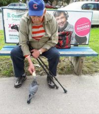 Old Man and Pigeon