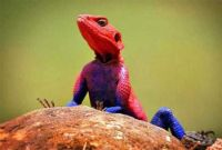 Spiderman Lizard