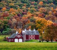 Red and White Barn Surrounded by Trees