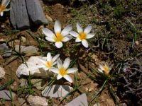 Flowers on greek soil