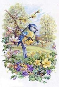 Sýkora modřinka a jarní květy