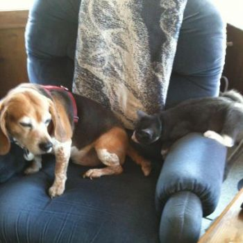 Barney the Beagle wants that cat to go away!