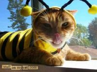 Bee Cat (Smaller)
