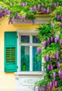 Wistera Window