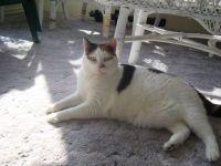 My cat Cleo!