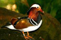 Stunning Bird