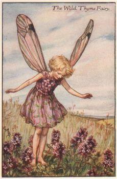 Wild Thyme fairy