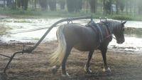 cheval de travail