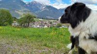 Chico in Ranggen Tirol